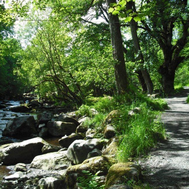 247  Tryweryn  Trail