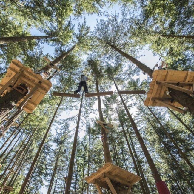 Tree Hoppers036